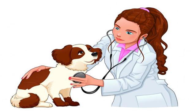 Veterinarian-resume-sample